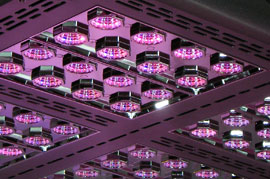 Mars Pro Series LED Grow Lights