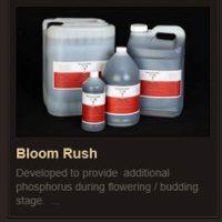 Bloom Rush